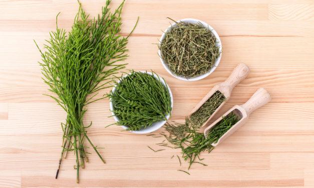 Benefícios do chá Seca Barriga